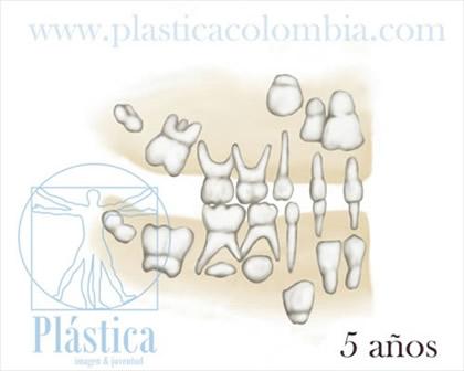 Desarrollo Dental