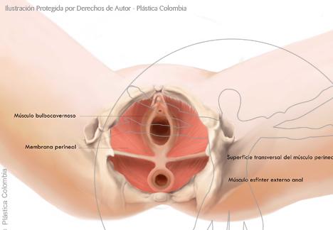 Partes genitales femeninas | Plastica Colombia