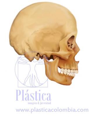 Ilustración de un Craneo Humando - Cirugía Maxilofacial