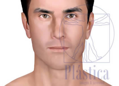 Ilustración nariz camello masculina