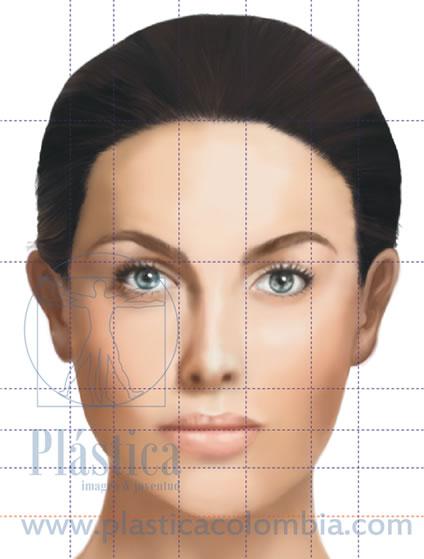 divisiones de la cara en tercios en forma vertical