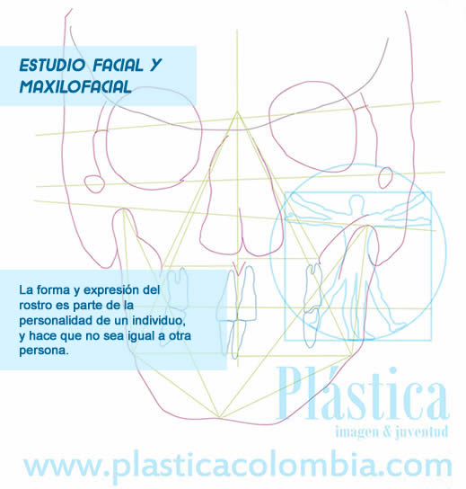 Esquema de estudio facial frontal