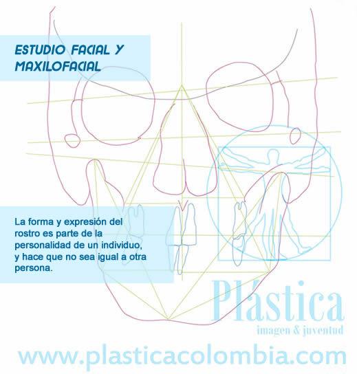Esquema de estudio facial frontal